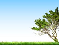 Tree Landscape with blue sky and grass. Vector Royalty Free Stock Photography
