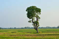 Tree landscape. The countryside landscape of Thailand Stock Images