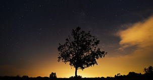 Tree in landscape at dawn stock footage
