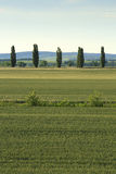 tree landscape Stock Photography