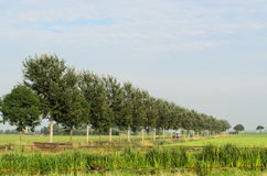 Tree landscape in Holland Stock Images