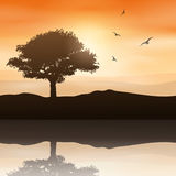 Tree landscape Royalty Free Stock Images
