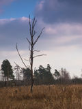 Tree. Landscape, view, nature, clouds, sky Stock Images