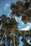 Tree landscape view Stock Image