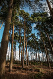 Tree landscape view Royalty Free Stock Photography