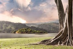 Free Tree Landscape With Trunk And Roots Spreading Out Beautiful On Grass Green With Mountains And River Nature Background With Clouds Stock Photography - 148437352