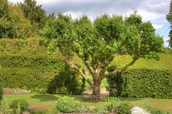Tree in landscaped garden Stock Photos