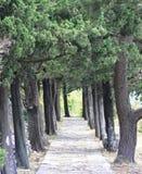 Tree lane. Small path surrounded by tree lane in Kamenari, Montenegro Stock Photography