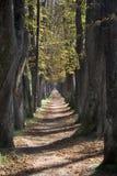 Tree lane Royalty Free Stock Image