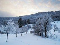 Tree lane. Line of trees making lane in winter scenery Stock Images