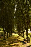 Tree lane Royalty Free Stock Photos