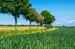 Tree lane Royalty Free Stock Photo