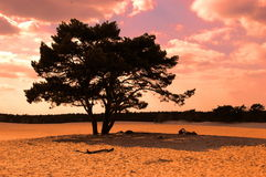 Tree at Lange Duinen. Tree at sand dunes in Lange Duinen, the Netherlands Royalty Free Stock Photo