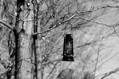 Tree Lantern. A black and white photo of a lantern hanging in a tree on our land.  It is by a bench in the woods Royalty Free Stock Image