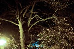 Tree with lantern in dark cold night. Taken in the park of the church in sulzbach am main Royalty Free Stock Photography