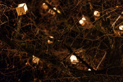 Tree Lanterns Royalty Free Stock Photo