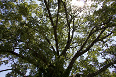 Tree. Large Tree in the middle of the city Royalty Free Stock Photography