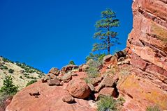 Tree and large rocks. A pine tree and large rocks with copy space to the left stock photography