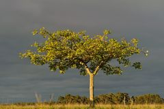 Tree in late afternoon Royalty Free Stock Photography