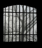 Tree, and lattice Stock Images