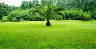 Tree and lawn Royalty Free Stock Photo
