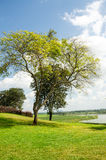 Tree and lawn,Natural and beautiful tropical garden Royalty Free Stock Image