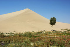 Tree lawn and sand dune Royalty Free Stock Image