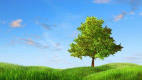 Tree on a lea stock footage