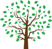 Tree with  leaf. Tree with green leaf of frame Royalty Free Stock Image