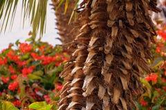 Tree, Leaf, Arecales, Plant Royalty Free Stock Photos