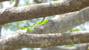 Tree leaf blown by wind. Tree leafs are  blown by calmly wind in the tropical forest stock video