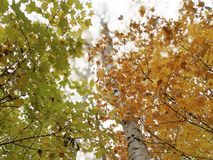 Tree, Leaf, Branch, Autumn Stock Image