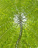 Tree and leaf canopy. A lush tree and leaf canopy stock photos
