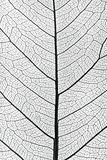Tree leaf close up Royalty Free Stock Image