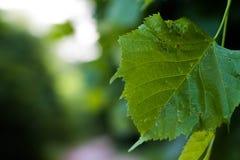 Tree leaf close up Stock Photo