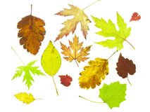 Tree leaf fall Stock Photo