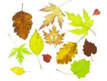 Tree leaf fall stock photo