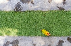 Tree leaf on green grass. Top view of yellow tree leaf on green grass in ornamental garden stock photos
