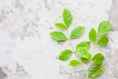 tree leaf on ground1 stock photo