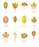 Tree leaf icon. Vector illustration of different kind of treea Stock Photos