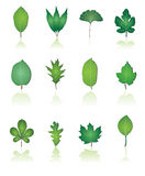Tree leaf icon. Vector illustration of different kind tree leafs - vector icon Royalty Free Stock Images