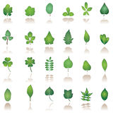 Tree leaf icon. Vector illustration of different kind tree leafs - vector icon Stock Photography