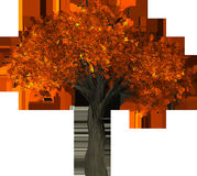 Tree, Leaf, Orange, Autumn Royalty Free Stock Photography