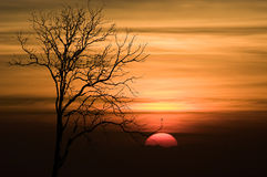 Tree Leaf out  on Sky. Shape of Silhouette Tree.No Detail Only Line and Structure on Orange Sky and Red Big Sun at sunset.Tree leaf out have only branch and twig Royalty Free Stock Images