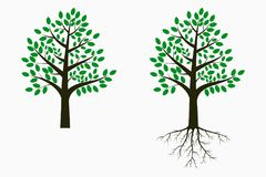 Tree with leaf and root. Set of trees. Vector. Royalty Free Stock Images