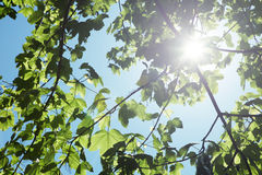 Tree With Leaf Sun Shine Stock Photo