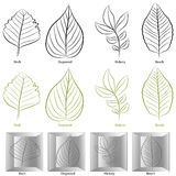 Tree Leaf Type Set Stock Image
