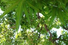 Tree, Leaf, Vegetation, Plant