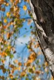 Tree, Leaf, Woody Plant, Branch royalty free stock photo