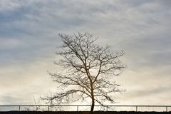 Tree in winter day royalty free stock image